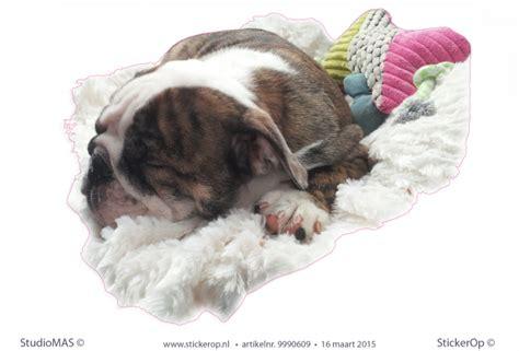 muursticker van eigen foto madelons hond