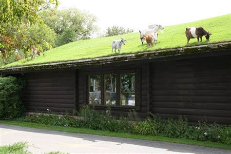 Goats On Roof Door County by Al Johnsons Swedish Restaurant
