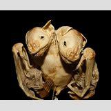 Conjoined Twins Animals | 1900 x 1533 jpeg 218kB