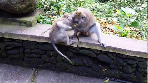 Hero4 Monkey bali ubud monkey forest 2016 gopro