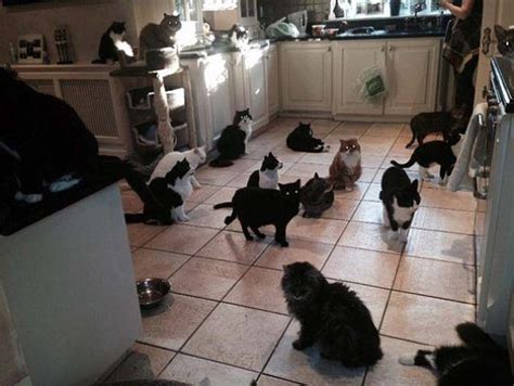 Cat Kitchen by She Cats So Much She Spends 163 90 000 On Them Per Year