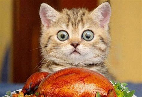 come alimentare un gatto l alimentazione gatto clinica veterinaria privata