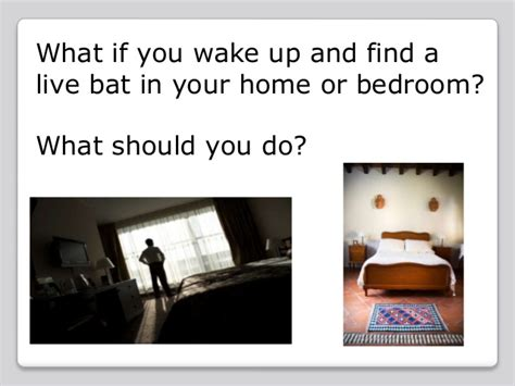 bat in bedroom what to do bat bedroom rabies shot savae org