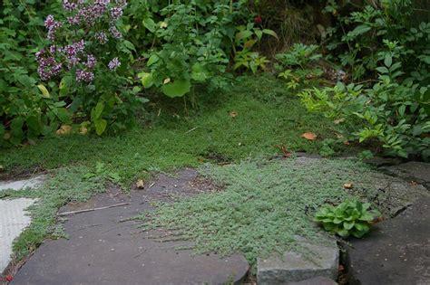backyard ground cover garden fantastic garden design with ground cover drought