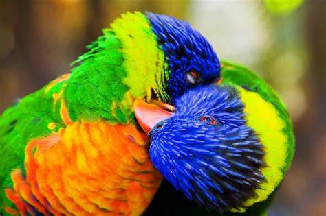 most beautiful colors the 10 most beautiful and colorful birds that beautify
