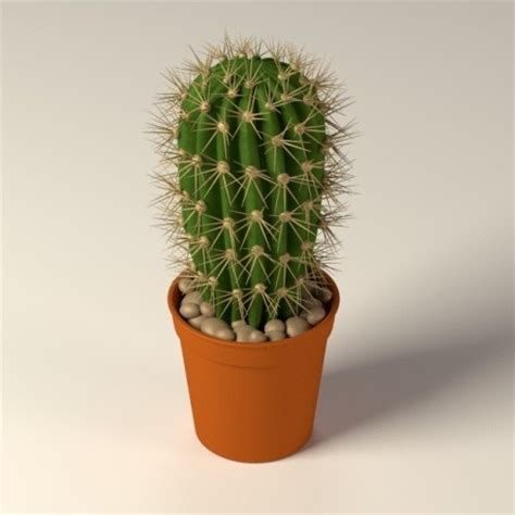 cactus planter 8 plants that make for a clean and happy office