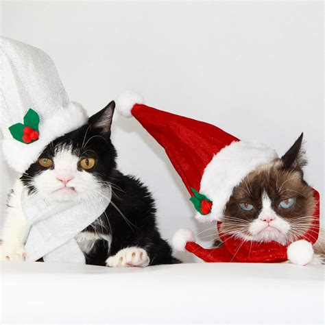 cat instagram cats dogs of instagram prepare for the holidays