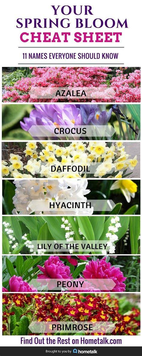 Flower Garden Names 25 Best Ideas About Azaleas Landscaping On Flowers Garden Azalea Shrub And Yard