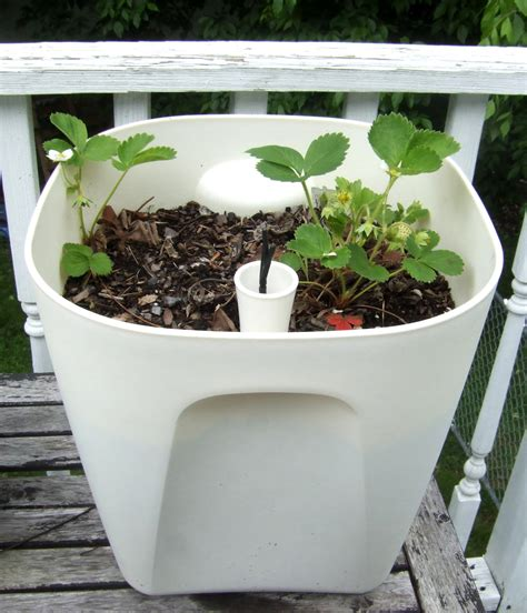 self watering planters diy self watering planter options