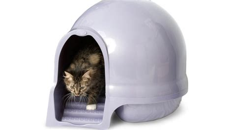 lettiere automatiche per gatti lettiera per gatti automatica citola ad accesso