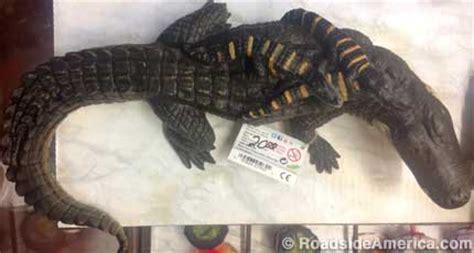 carved alligator souvenir arkansas alligator farm hot