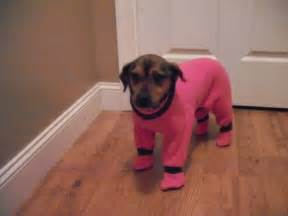 Pink chocolate dog snow suit with feet by sassywoofywear on etsy