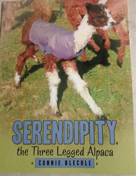 the alpaca books breezy ridge alpacas llc missouri suri alpaca farm is an