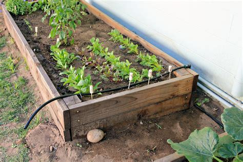 diy irrigation system installing  drip system