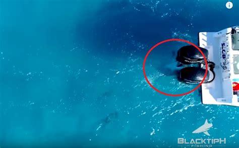 shark bites boat video 10 foot bull shark attacks fishing boat off florida