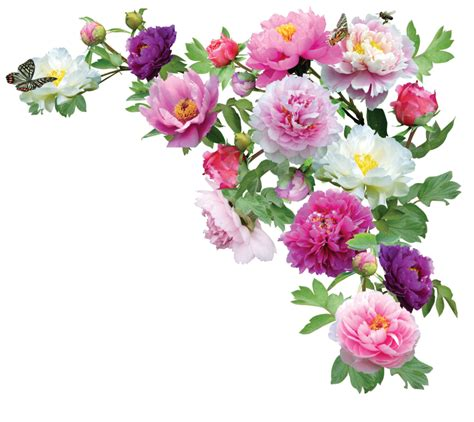imagenes de flores ilustradas peoniespng by kmygraphic on deviantart wallpapers and