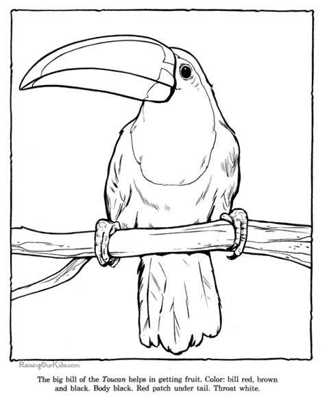 coloring pages of birds in the rainforest free rainforest coloring pages toucan coloring picture