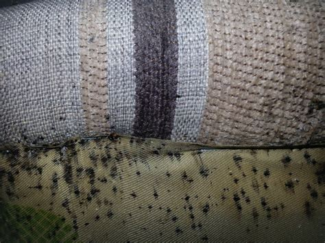 bed bug bite effects health effects from bed bug bites can bed bugs make your