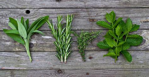 erbe e spezie in cucina spezie ed erbe aromatiche per il pesce profondamente buono