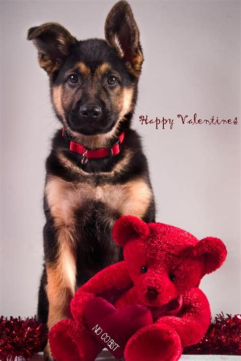 valentines puppy puppy dogs puppies happy s day german shepherd german