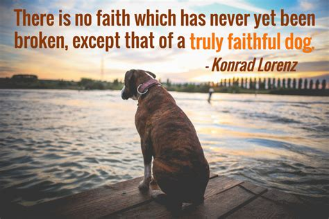 sayings about dogs 25 quotes with pictures