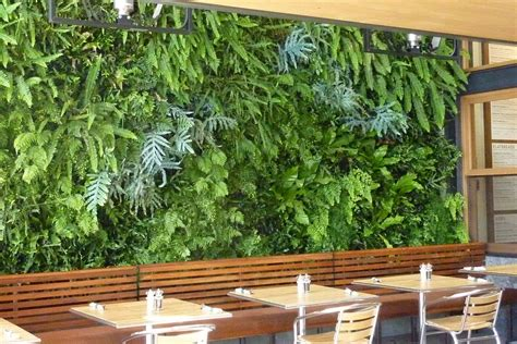 wall garden systems plants on walls vertical garden systems fern wall for