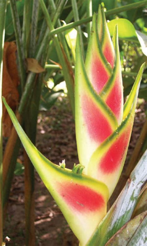 image gallery mexican plants