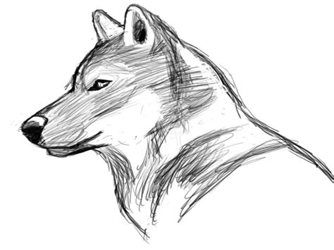 Sketches Wolf by Wolf Sketch
