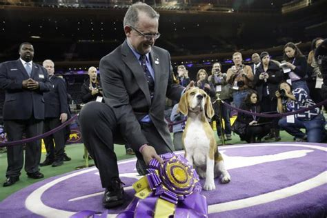 what channel is westminster show on 2016 westminster show tv coverage live schedule and expectations