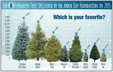 where to buy trees which trees did you buy this season arbor day