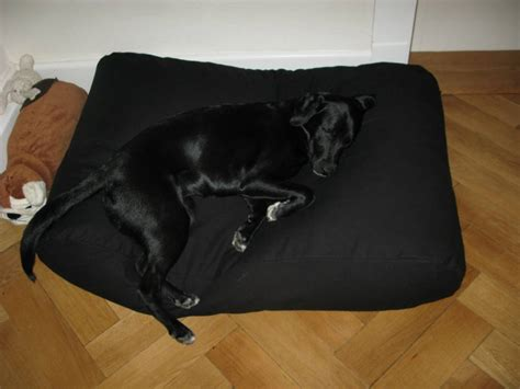 black dog bed dog s companion 174 dog bed black dog beds by dog s companion 174