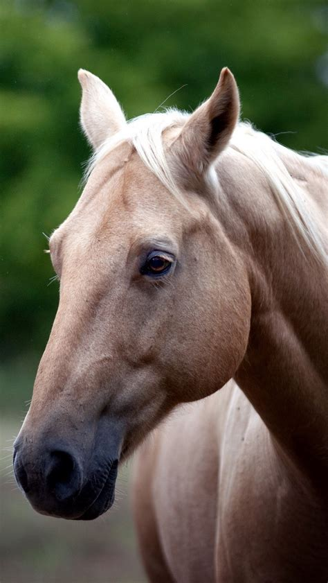 wallpaper  horse face eyes iphone ses