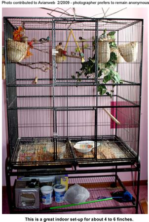 zebra finch housing finches breeding or as pets