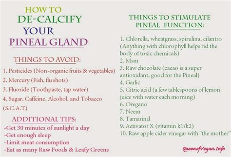 Pineal Detox Diet by Best 25 Pineal Gland Ideas On Decalcify