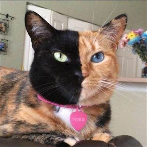 why do different colored why do cats different color kittens quora