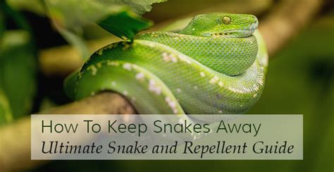rid  snakes complete snake repellent guide