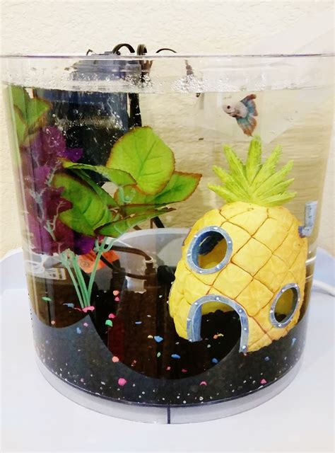 a gamer s the survival guide to betta fish