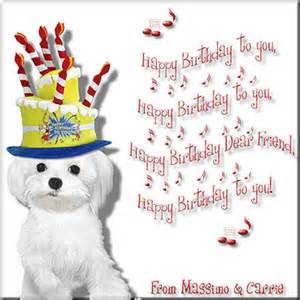 happy birthday toy maltese dogs forum spoiled