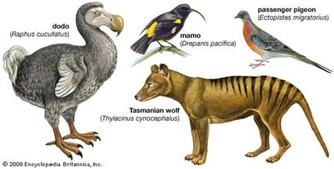 extinction definition amp animals britannicacom