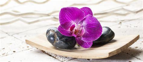come si bagnano le orchidee come curare le orchidee consigli cura e potatura