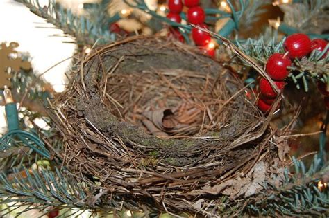 how to make a birds nest for xmas tree nest in the tree forest society