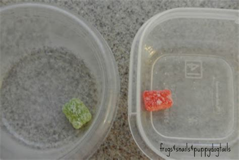 can dogs eat gummy bears gummy science experiment fspdt