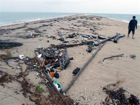 Bibit Udang Windu pulau maspari terancam udang windu mongabay co id