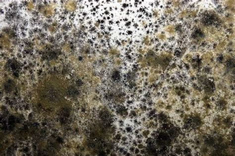 how to get rid of mold in house how to get rid of mold 6 places household mold may be lurking bob vila