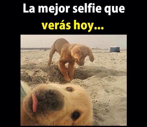 imagenes para whatsapp animales fotos divertidas para whatsapp memes chistes