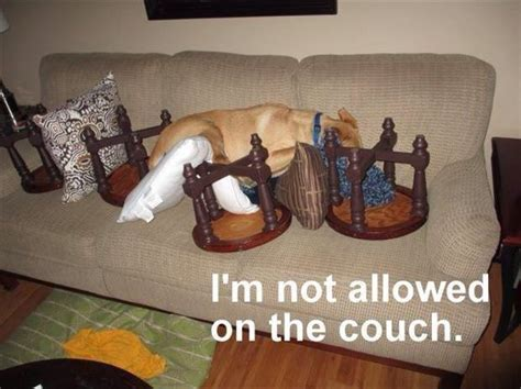 how do you keep dogs off the couch not even obstacles can stop this dog from sleeping on the