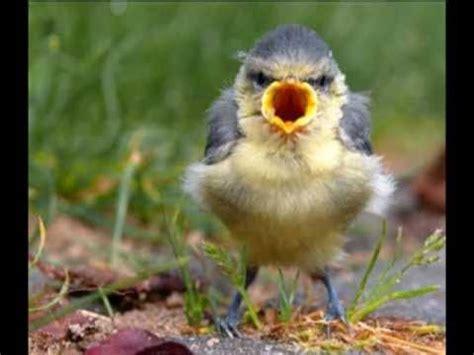 l uccellino della comare testo l ucccellino della comare tony di marti karaoke by enry