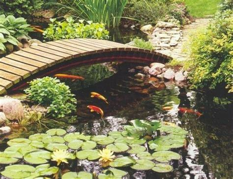 25 best ideas about pond maintenance on