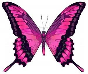 mariposas pics rinc 211 n de 4 186 ceip rosa chacel lunes po 201 ticos