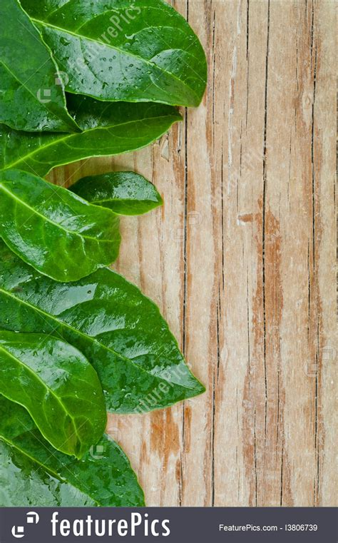 green leaves  rustic wooden background
